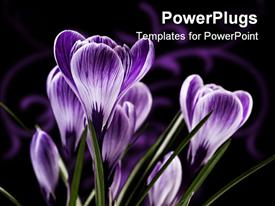 PowerPoint template displaying bunch of flowers