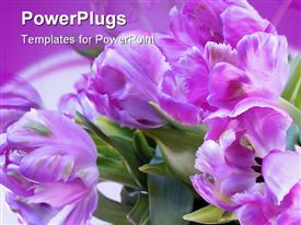PowerPoint template displaying oLYMPUS DIGITAL CAMERA depiction of flowers manipulated in PSP