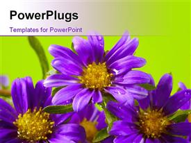 Purple flowers template for powerpoint
