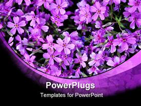 Violet flowers at the meadow, garden, field powerpoint theme