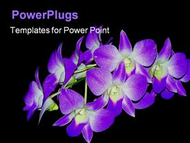 Beautiful image of purple orchids powerpoint template