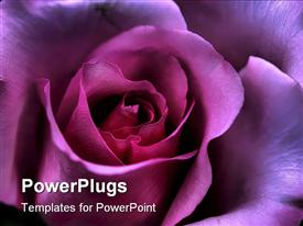 PowerPoint template displaying valentine's Day rose symbolizing love and affection