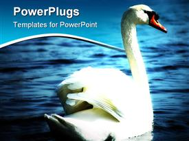 PowerPoint template displaying an elegant white colored swan on a blue sea