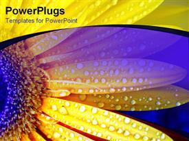 Vibrant yellow daisy flecked with raindrops presentation background