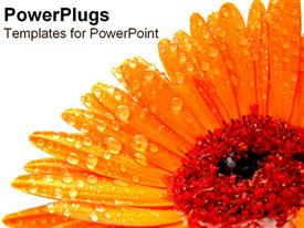 Bright orange gerub with raindrops powerpoint design layout