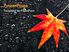 PowerPoint template displaying red Japanese maple leaf among raindrops
