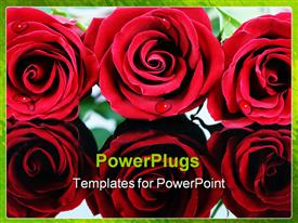 PowerPoint template displaying close up of six red roses with droplets of dew, green border