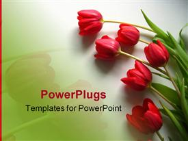 Red tulips powerpoint design layout