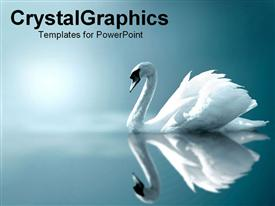 Serene swan gliding on water template for powerpoint