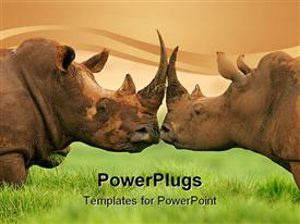 PowerPoint template displaying two white (square-lipped) rhinoceros (Ceratotherium simum), South Africa