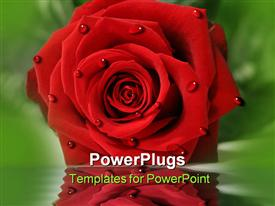 PowerPoint template displaying red rose laying on table