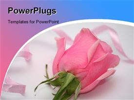 PowerPoint template displaying rose_0420