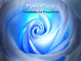 White - blue rose. decoration for CD of a disk , album and other powerpoint design layout