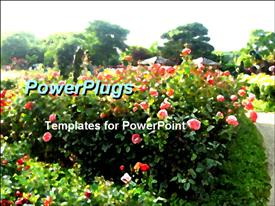 Roses garden powerpoint design layout