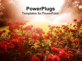 PowerPoint template displaying landscape with red flowers, green grass lawn being watered by sprinklers