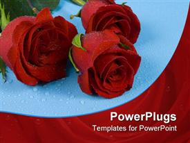 Three dark red roses with drops are on the blue one powerpoint design layout