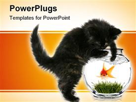 PowerPoint template displaying black kitten trying to reach scared goldfish in bowl