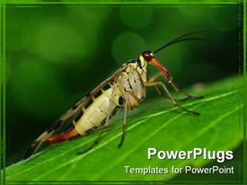 PowerPoint template displaying small scorpionfly sit on green big leaf