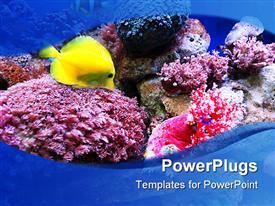 Sea life powerpoint design layout