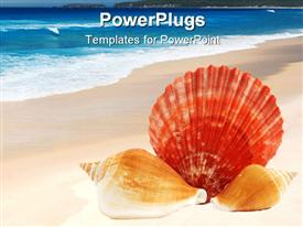 PowerPoint template displaying three sea shells, lying on the shores of a blue sea