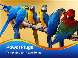 PowerPoint template displaying macaw parrots on a perch. six blue and yellow macaw and one red and green macaw