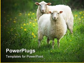 PowerPoint template displaying sheep in green grass field with yellow dandelions in the background.