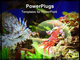 PowerPoint template displaying shrimps crawl on rocks underwater (depiction is slightly blurry)