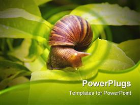 Snail on banana palm green leaf close-up powerpoint design layout