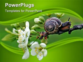 PowerPoint template displaying snail crawling on a branch of blooming apple tree