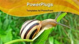 PowerPoint template displaying focus on center. one color snail (gastropod mollusk) on green leaf, nature details