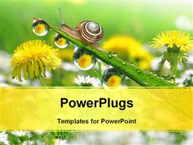 PowerPoint template displaying a snail with a number of flowers in the background