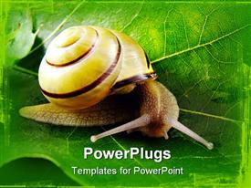 PowerPoint template displaying natural depiction of a snail on a wide leaf
