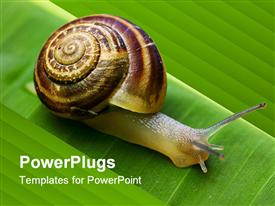 PowerPoint template displaying snail on banana palm green leaf close-up
