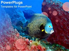 PowerPoint template displaying glowing fish swimming over coral reef in water setting
