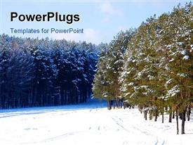 Beautiful snow-covered pine forest a winter landscape powerpoint template