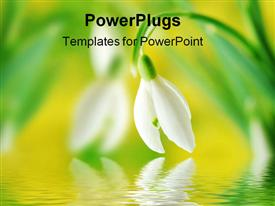 PowerPoint template displaying close-up of white snowdrop against green and yellow blurred background