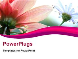 PowerPoint template displaying soft floral shot with nice beautiful flowers in white and pink with curves in foreground