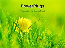 PowerPoint template displaying fresh spring background. Shining dandelions in fresh grass in the background.