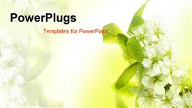 PowerPoint template displaying spring Blossoms with white flowers and green leaves
