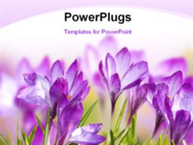 Beautiful Spring Flowers powerpoint theme