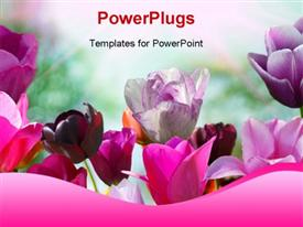 Beautiful spring flowers powerpoint template