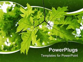 PowerPoint template displaying a number of leaves with their reflection in the  background