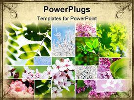 Collage of beautiful spring flowers and leaves powerpoint design layout