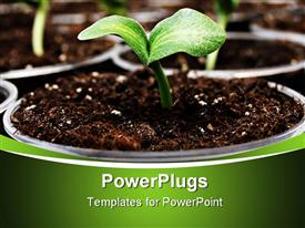 PowerPoint template displaying fresh green pumpkins sprouting in cute plant pots