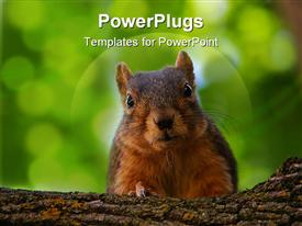 PowerPoint template displaying squirrel up on a branch staring at the camera