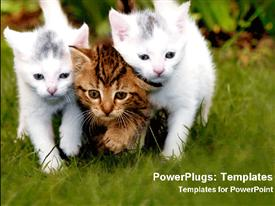 PowerPoint template displaying three beautiful kittens together with a green background