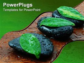 PowerPoint template displaying three leaves atop black stones with water drops