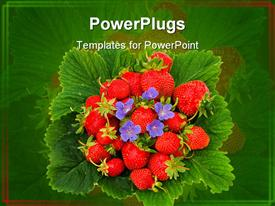 PowerPoint template displaying pile of ripe red strawberries with small purple flowers and green leaves