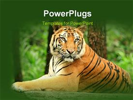 We wait to get close from our car to this wild animal which is famously named Tiger powerpoint template