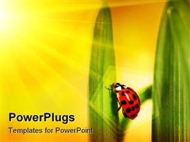 PowerPoint template displaying sun shining on ladybug climbing a leaf